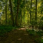 """Sacred Grove Late Spring"" by dbwalton"