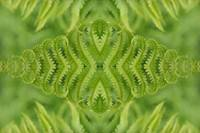 Diamond Fern
