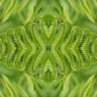 Diamond Fern Art Prints & Posters by Amy Blount Achor