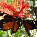 """""""butterflies spring 2014"""" by gallerymay"""