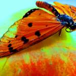 """""""butterfly apple"""" by gallerymay"""