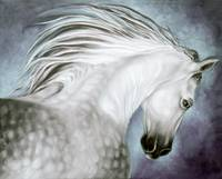 Andalusian Dapple Beauty 2