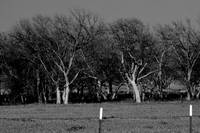 Red River Pecan Grove