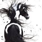 """Black & White Pinto"" by AmyLynBihrle"
