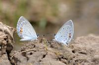 ButterflyPair