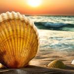 """""""Sea Shells"""" by dimensionalelements"""