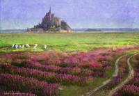 mont st. michel flowers and grazing sheep