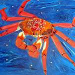 """Galapagos Sally Lightfoot crab"" by 1kelton"