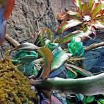 """""""Waxy Monkey Frogs"""" by 1kelton"""