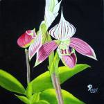 """lady slipper orchid"" by 1kelton"
