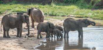 Elephant Family at Waterhole