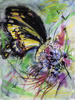Expressive Black Butterfly