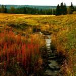 """""""Jizeran Brook"""" by picturesbybgale"""