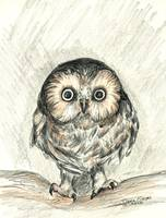 Hooty Owl Color