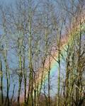 Rainbow Hiding Behind The Trees by Kristen Fox