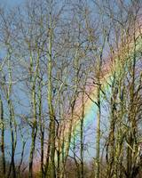 Rainbow Hiding Behind The Trees