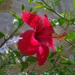 """Fire red flower"" by Jurchx"