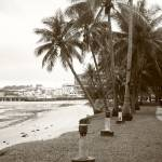 """Tropic nature monochrome - coconut tree"" by sghomedeco"