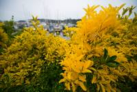 20140525 Poulsbo / Bainbridge Island (13 of 27)