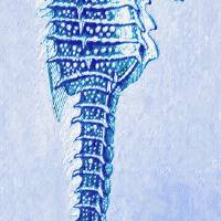 """aqua seahorse facing left"" by Jane Schnetlage"