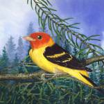 """WesternTanager"" by DNCartist"