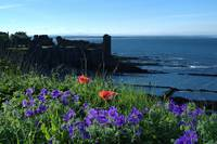 St Andrews Castle Amongst Wild Flowers