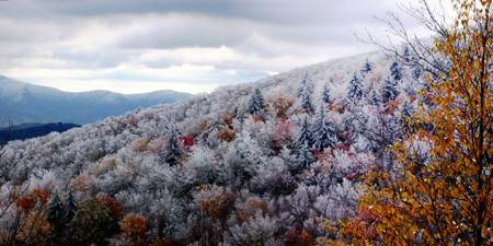 Icy East Tennessee Trees