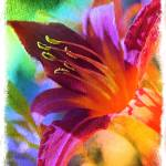 """""""Daylily Delight best"""" by Groecar"""
