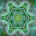"""""""Succulent Garden"""" by SeaAngel12"""