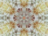 Mandala Flower of Golden Light