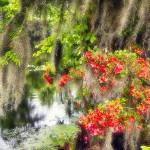 """Spanish Moss and Azalea"" by George_Oze"