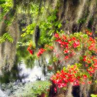 Spanish Moss and Azalea Art Prints & Posters by George Oze