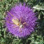 """""""flower with grasshopper"""" by archangelus"""