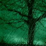 """Emerald Tree of Hope"" by Barbara_Stock"