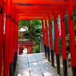 """Ueno Park Pathway"" by robertmeyerslussier"