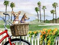 Chihuahuas Bike Ride
