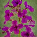 """""""Wildflowers (03944)"""" by Fotofrieze"""