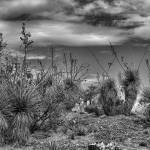 """""""Living Desert"""" by robertmeyerslussier"""