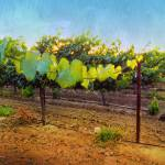 """Grape Vine in the Vineyard"" by shariwarren"