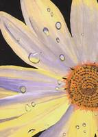 Daisy with Water Droplets