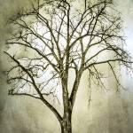 """""""Tree in Ada, MI (9702)"""" by Fotofrieze"""