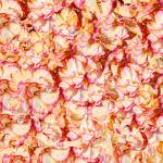 """Flowerbed (02739)"" by Fotofrieze"