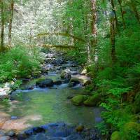 """The Flow Of The Creek Under The Forest"" by Photography Moments"