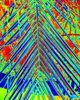 Palm Frond - 1