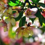 """Crab Tree Bokeh"" by LJdesigns"