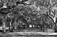 Charleston Battery Park B&W