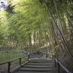 """Bamboo Path"" by whitneybee"