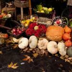 """""""Autumn Produce"""" by raetucker"""