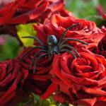 """Spider Roses"" by raetucker"
