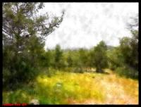 Forest of Rosh Ha'ayin 4